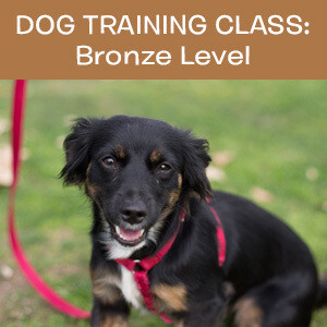 Item 03. Online Dog Obedience Training Class—Bronze Level