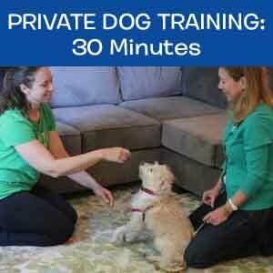 Item 06. Online Private Dog Obedience Training, 30 mins
