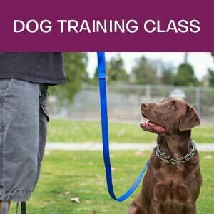 Item 04. Dog Obedience Training Class