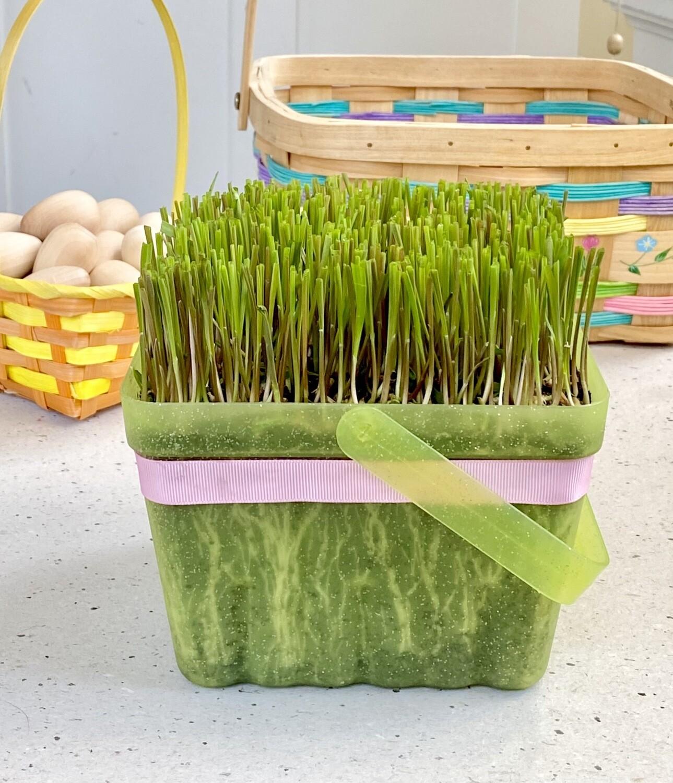 Quick-Grow Grass Basket