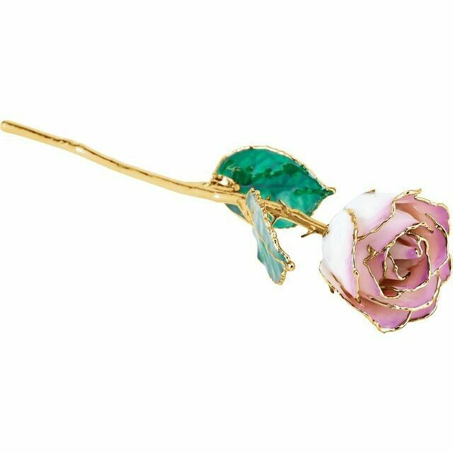 Lacquered Cream Picasso Rose with Gold Trim
