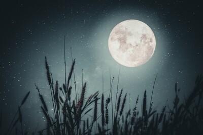 Influence de la lune  sur les pratiques agricoles (Hiver 2021/22+ Lieu à définir)
