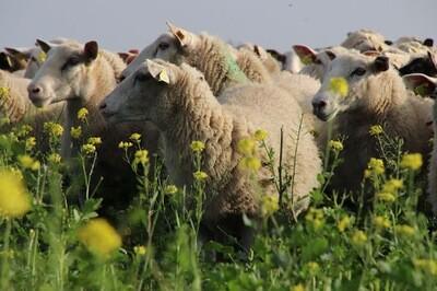 Un élevage adapté à ma ferme bio : viser la rentabilité et l'autonomie (23+30 novembre - Lieu à définir)