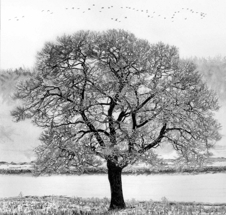 "Shubie Tree   10 3/4 "" x 11 1/4""   ART PRINT"