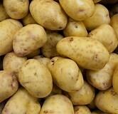 Yukon Gold Seed Potato