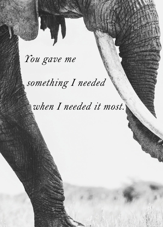Premium Gratitude Cards: Elephant