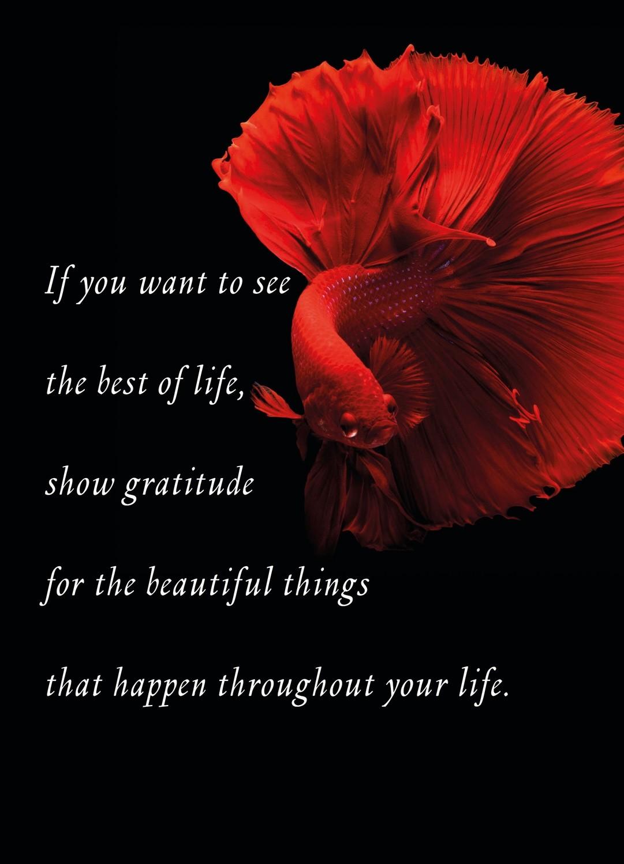 Premium Gratitude Cards: Red Fish