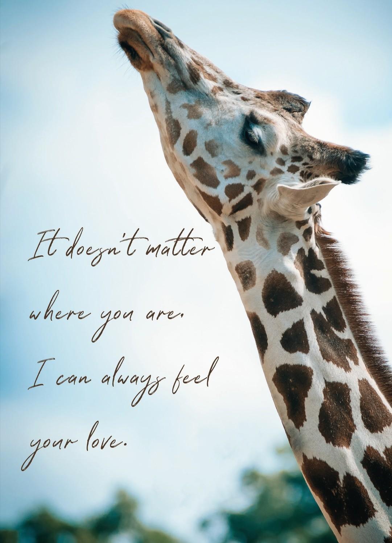 Premium Gratitude Cards: Giraffe