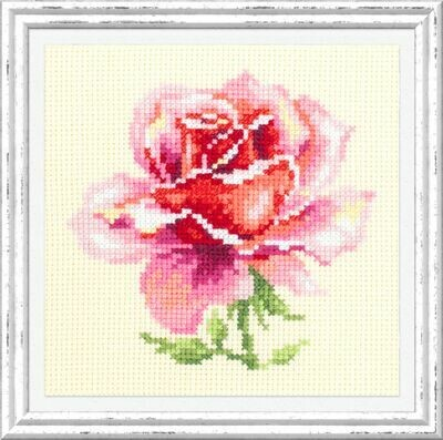 Chudo-Igla Pink Rose