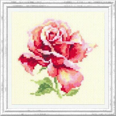 Chudo-Igla Beautiful Rose