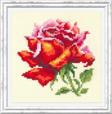 Chudo-Igla Red Rose