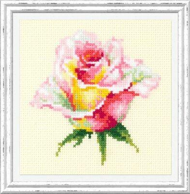 Chudo-Igla Blooming Rose