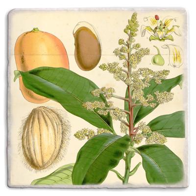 Botanical 07