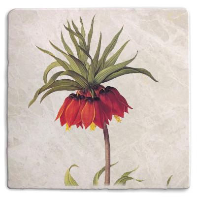 Botanical 09