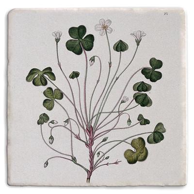 Botanical 18