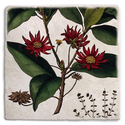 Botanical 22