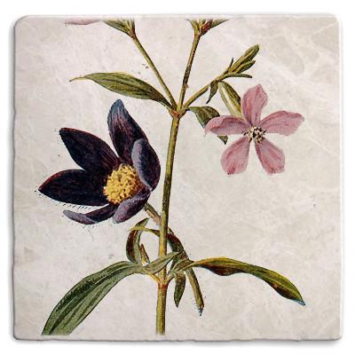 Botanical 24