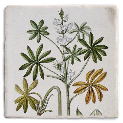 Botanical 25