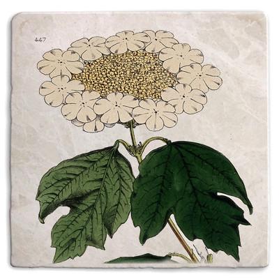 Botanical 27