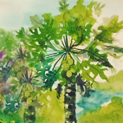 Paw Paw Trees