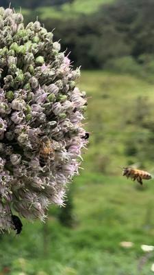Miel de abeja 1/2 lt