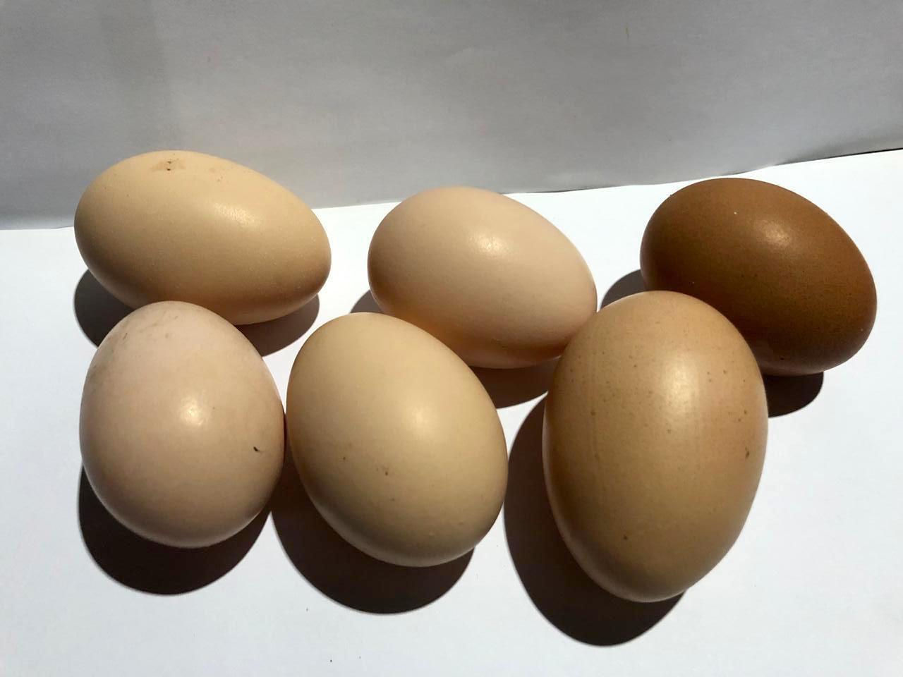 Huevos de Gallinas de Campo X 1 ($0,29c/u)