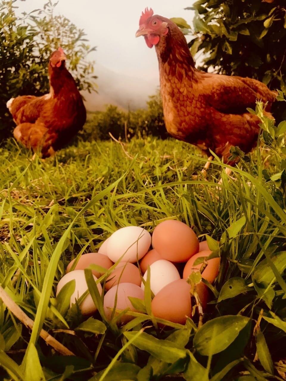 30 huevos -HLF- ($0,30 c/u),