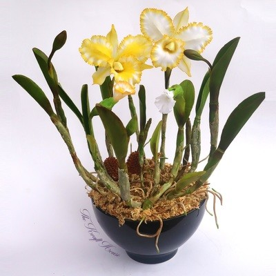White-Yellow Clay Cattleya Orchid Flower, Variant 1