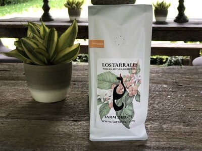 Roasted Guatemalan Specialty Coffee - Full Washed Maragogype