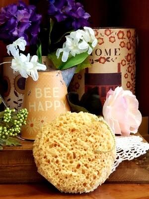 Big Round Sponge