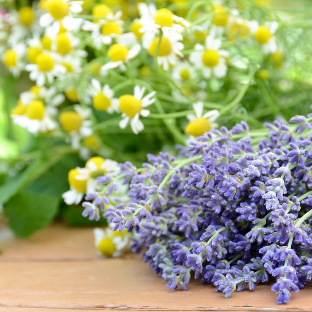 Lavender Chamomile -Candles
