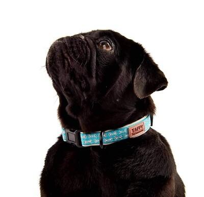 Taffy Collar in Woof
