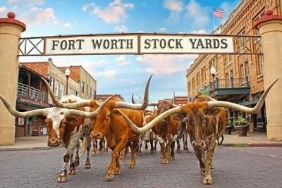 Big Texan Adventure
