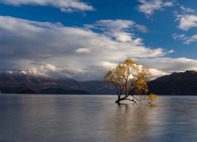 Tree Lake Print