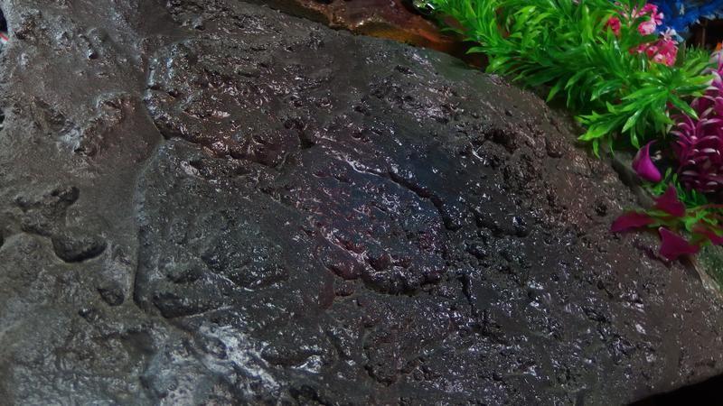 「濡岩」47cm X30cm前後 ジオラマ ディスプレイ