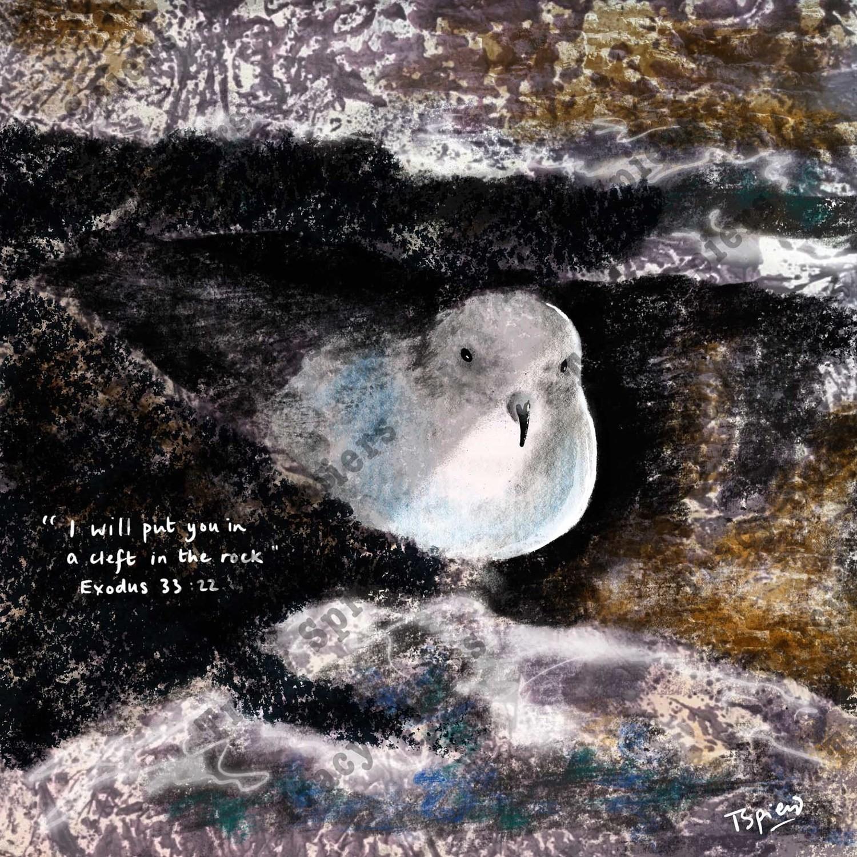 Dove in rock