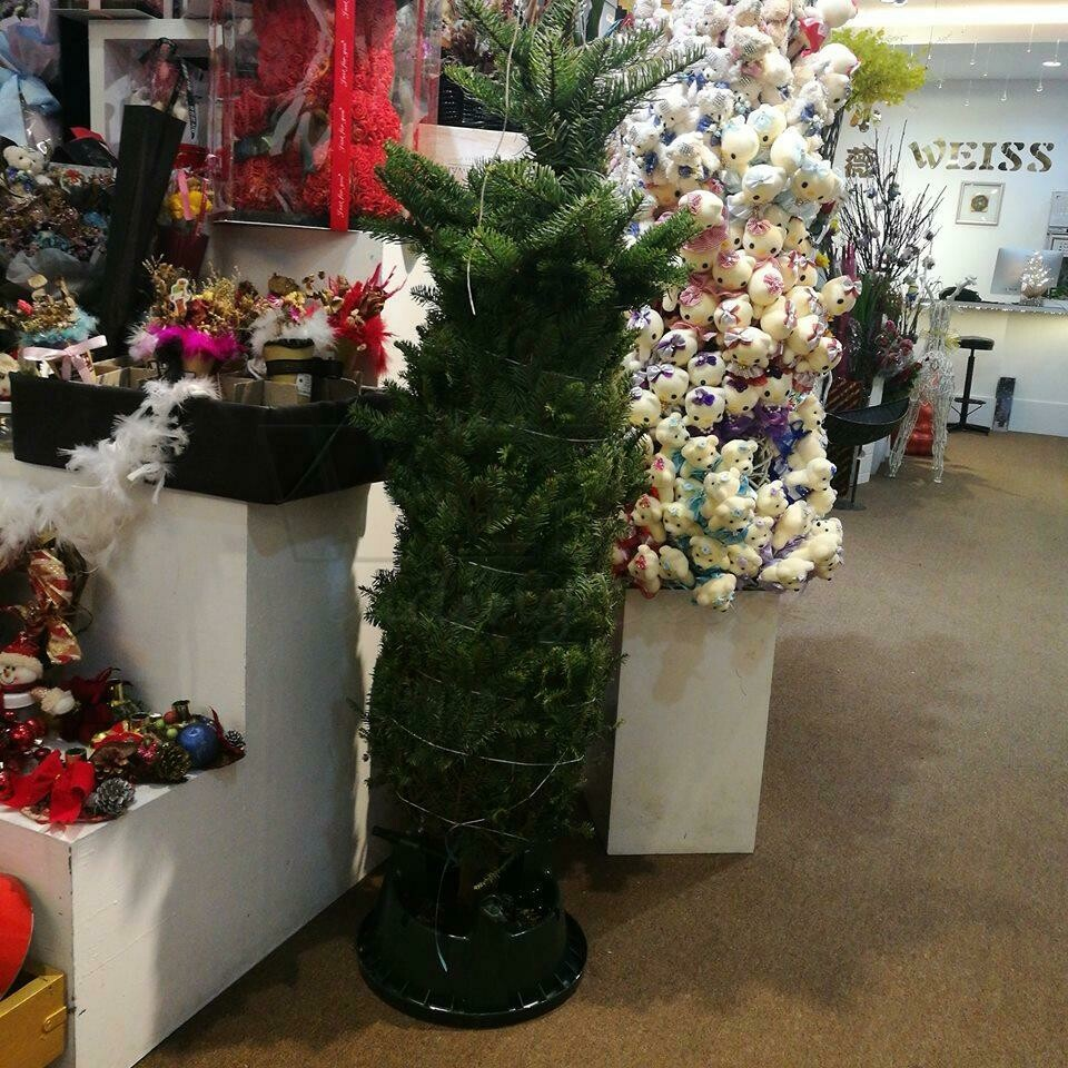 CHRISTMAS TREE (By: Weiss Flora & Gift From JB)