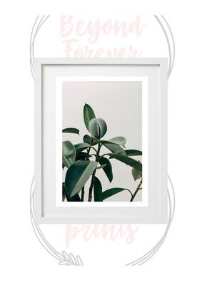 BG Plant Print