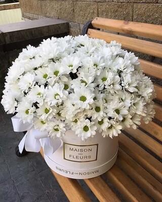 Коробка хризантем Kennedy