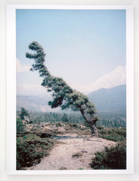 SOME WINDY TREES (V.D.) - >>> very last copies here
