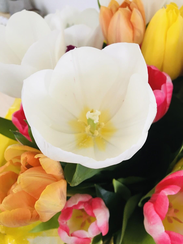 Paasvakantie tweedaagse 'Bloeiende bloemen'     15 & 16/04/2021 (stengels)