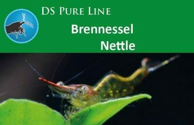 SaltyBee DS Pure Nettle 50gr