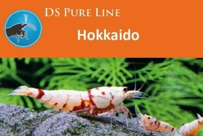 DS Pure Line Hokkaido 50gr
