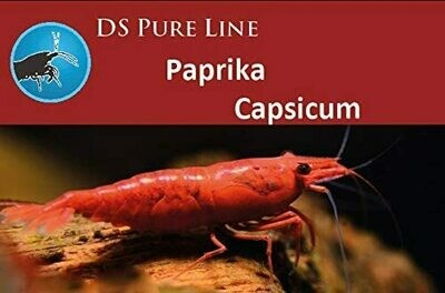 SaltyBee DS Pure Paprika 50gr