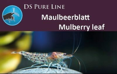 DS Pure Line Mulberry leaf 50gr