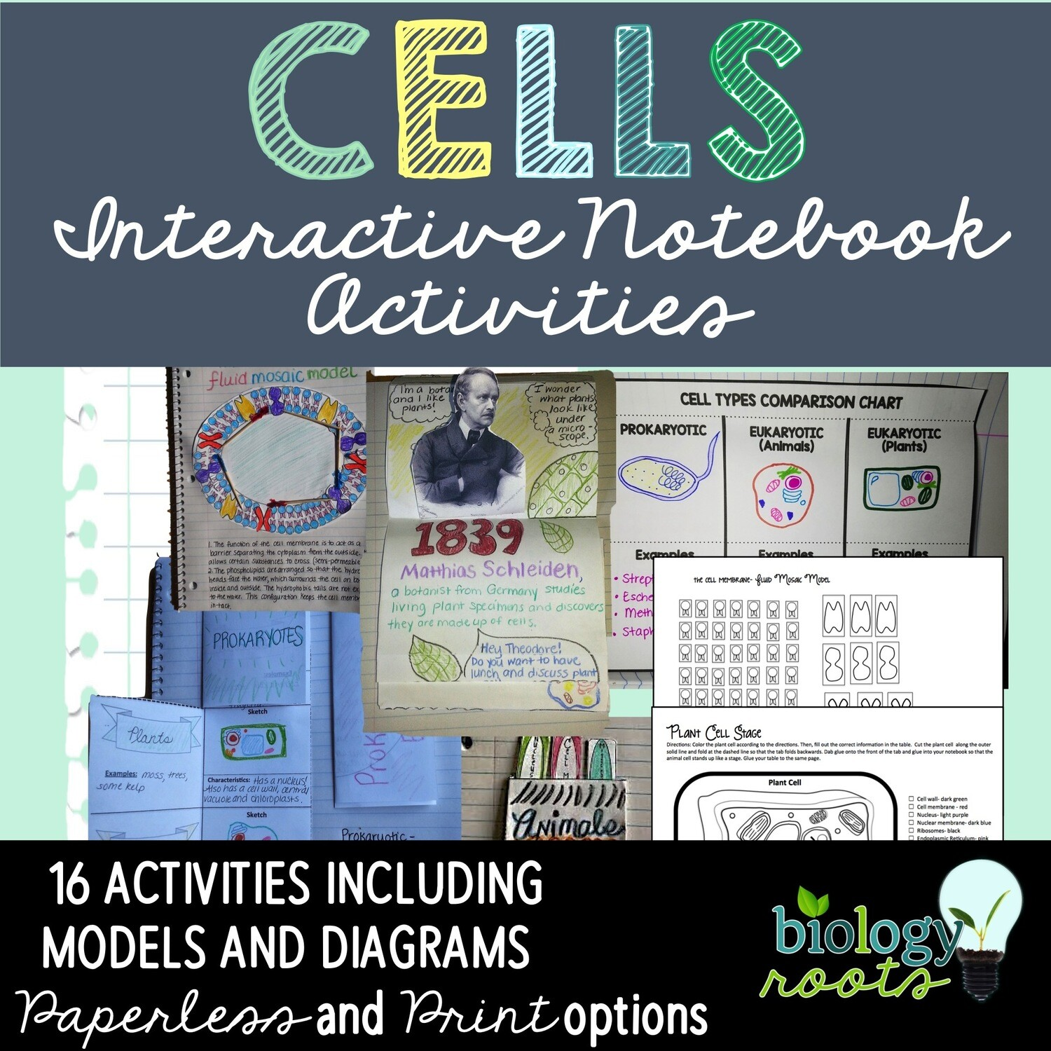 Cells Interactive Notebook