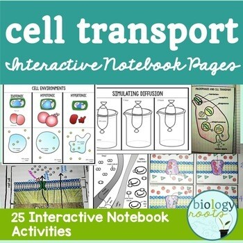 Cell Transport Interactive Notebook