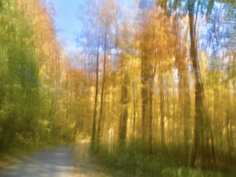 Autumnal colours 4