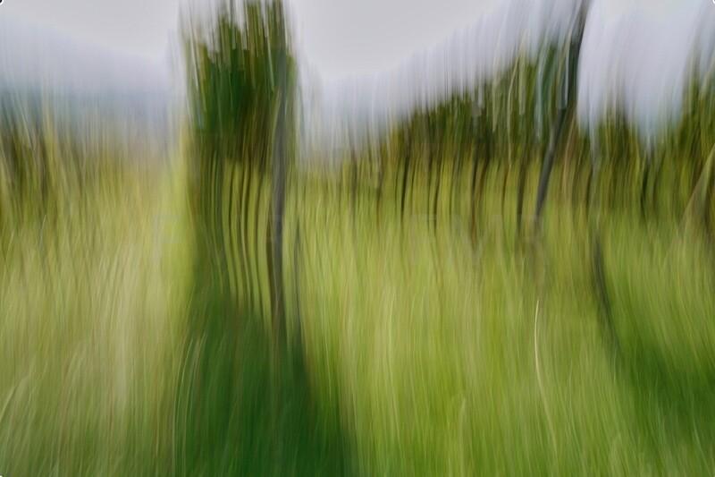Through the vineyards 4
