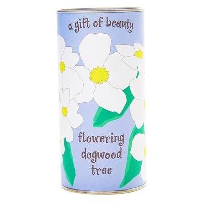 Flowering Dogwood // Seed Growing Kit